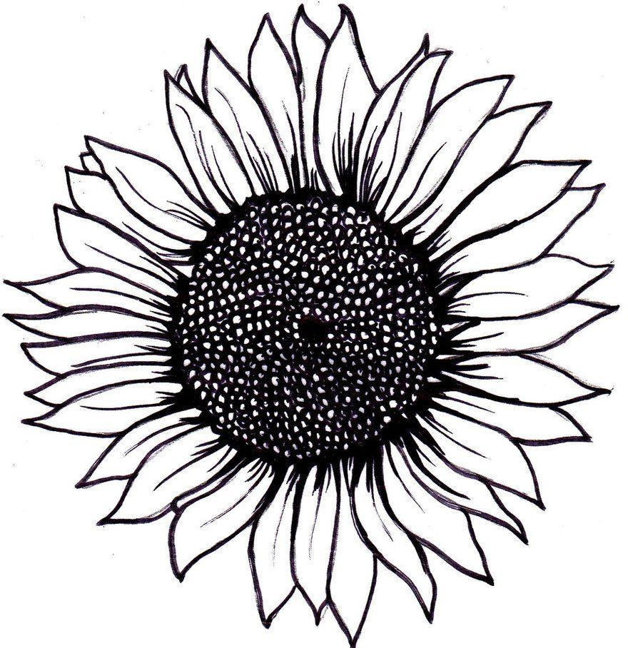 Sunflower tattoo idea | Inkkkkk. | Pinterest | Sunflowers, Tattoo ... for Clipart Sunflower Black And White  45jwn