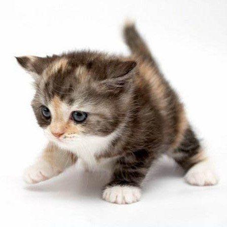 #Cute #little #kitten