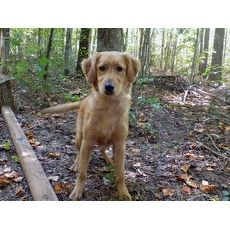 Gabe Richardson Rescue York South Carolina Pets Overstock Com Adopt Dogs Labrador Retriever Dogs Und Pets