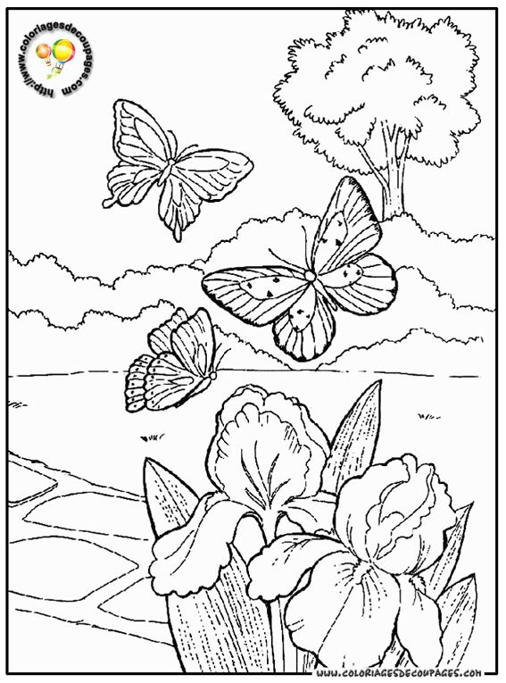 Papillon-21-coloriage.jpg (567×765)