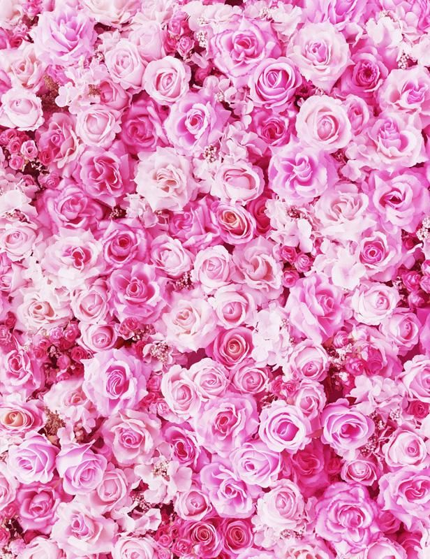 Blooming Pink Rose Flowers Backdrop For Wedding Photography Pink Flowers Background Flower Background Iphone Flower Backgrounds