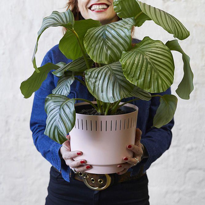 Garden House Beautiful Magazine Inspires Garden Lovers: Modn Lovr Modernist Inspired Pink Planter With Calathea