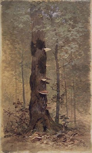 In the Woods by Francis Hopkinson Smith, American, 1839-1915. This is a transparent and opaque watercolor with black chalk on beige, thick, rough-textured woodpulp board.