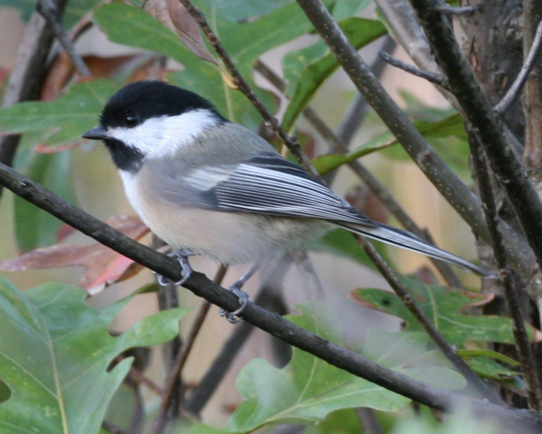 Charmant Beautiful Birds · Indiana Backyard ...