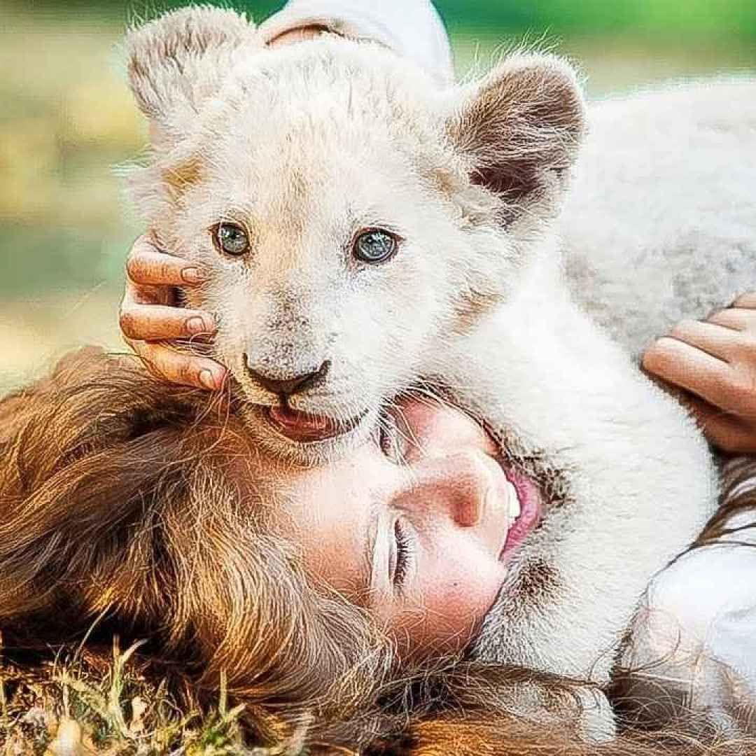 Prima Pagina Animali Carini Immagini Con Animali Leone Bianco