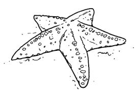 Risultati Immagini Per Alghe Marine Clipart Da Colorare