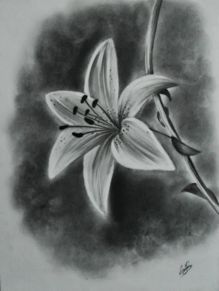 Realistic Lily Flower Drawing : realistic, flower, drawing, Quinta, Goede, Tattoo, Inspiration, Realistic, Flower, Drawing,, Beautiful, Drawings,, Drawing