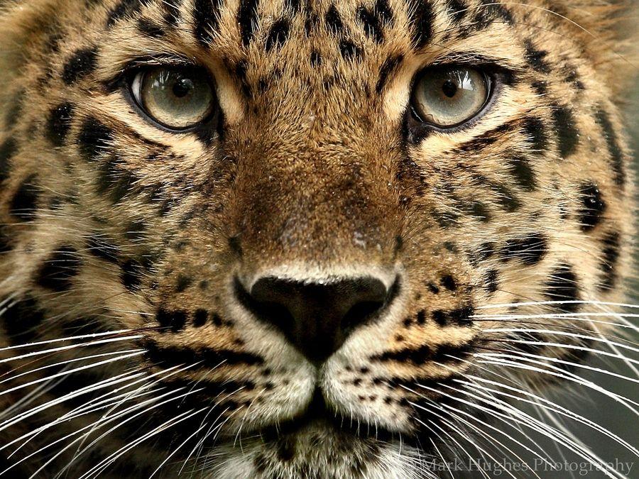 Beauty Up Close! by Mark Hughes, via 500px