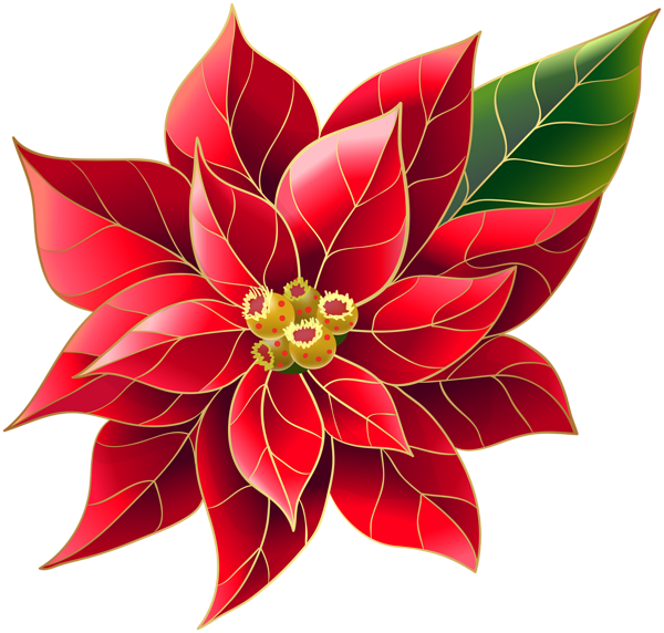 Xmas Poinsettia PNG Clip Art (With images) Christmas