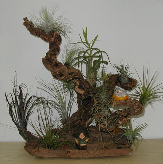 Pflanzideen pinterest pflanzen garten und deko - Tillandsien deko ...