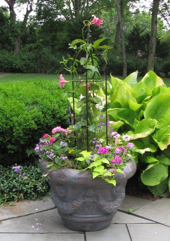 obelisk plant frame trellis w underplanting cons clematis canula impatiens geranium