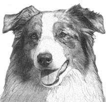 Rose Earset Australian Shepherd Correct