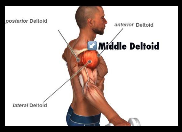 Anterior Deltoid Fiber!! | [Wed]Arms(Shoulders,Triceps,Biceps