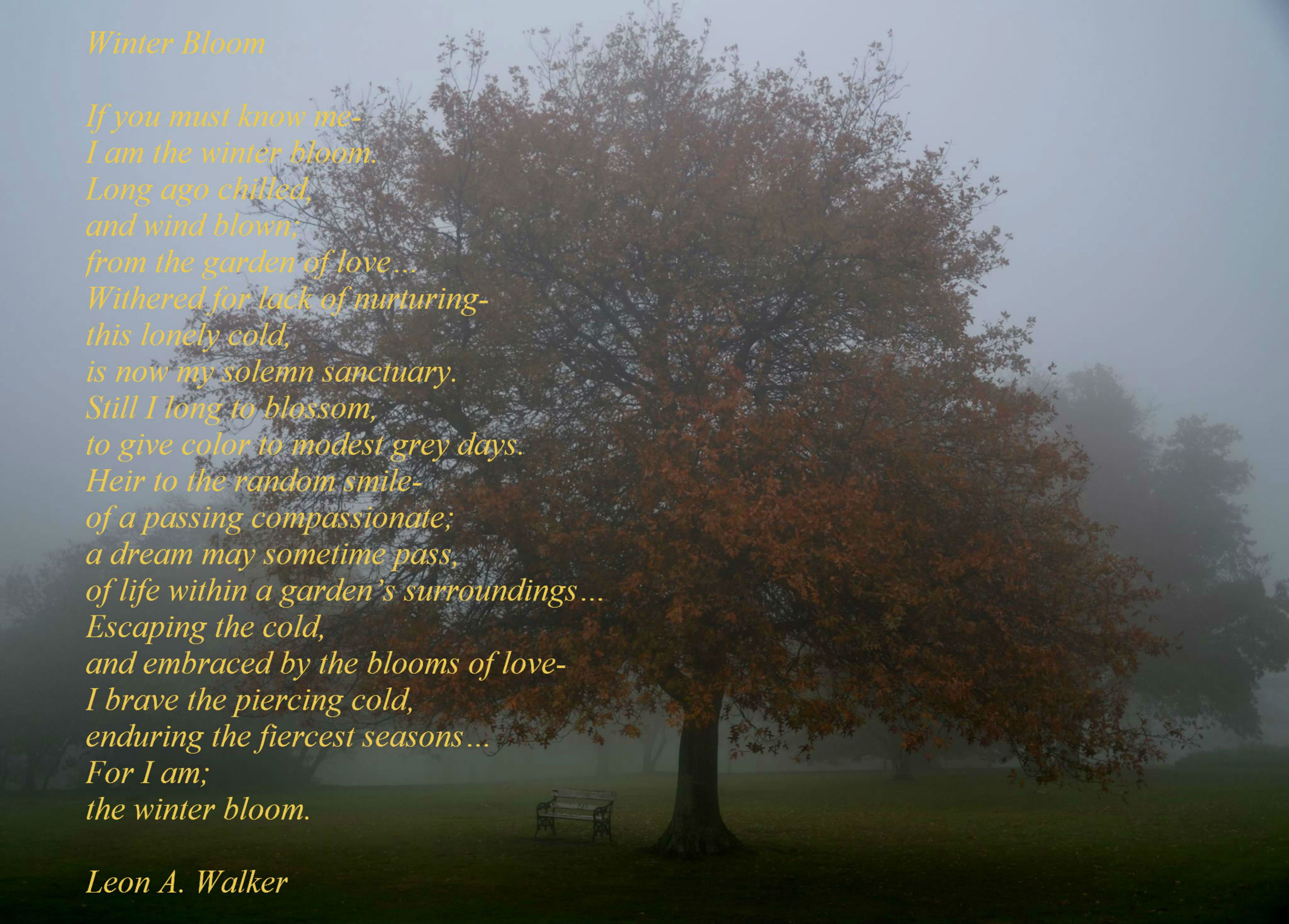 leon a walker u2013 winter bloom is from my book u201cequinox u201d u201cwinter