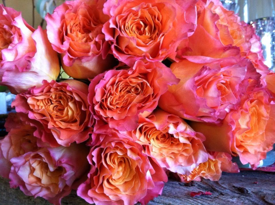 bright coral garden roses