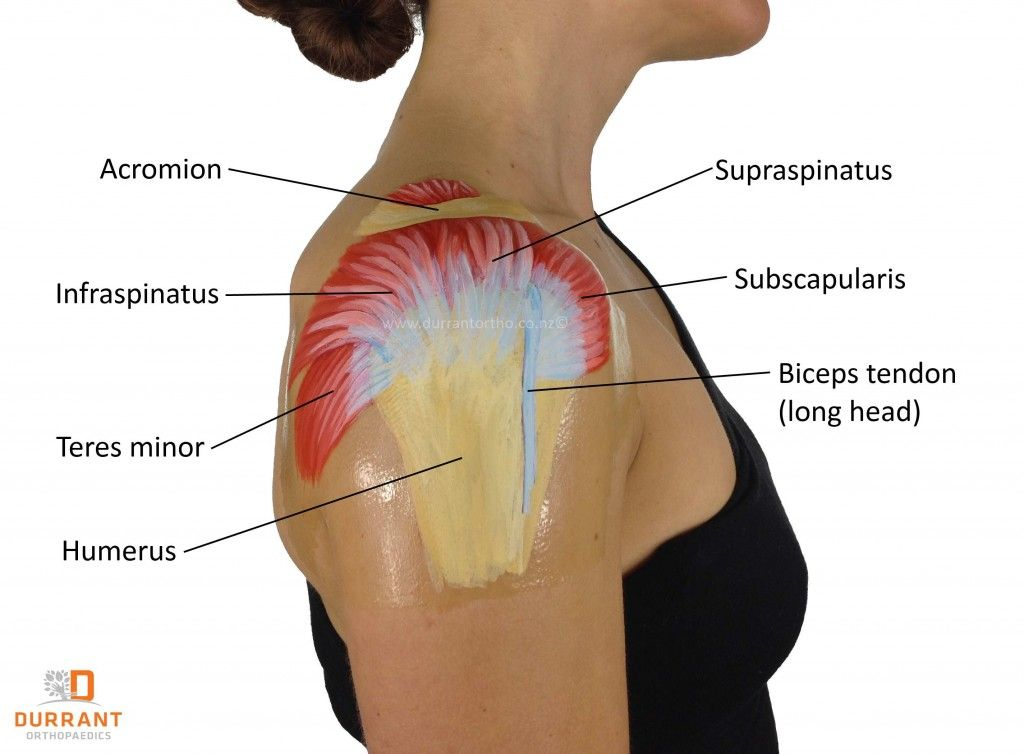 Rotator Cuff Muscles | Health | Pinterest | Rotator cuff, Muscles ...