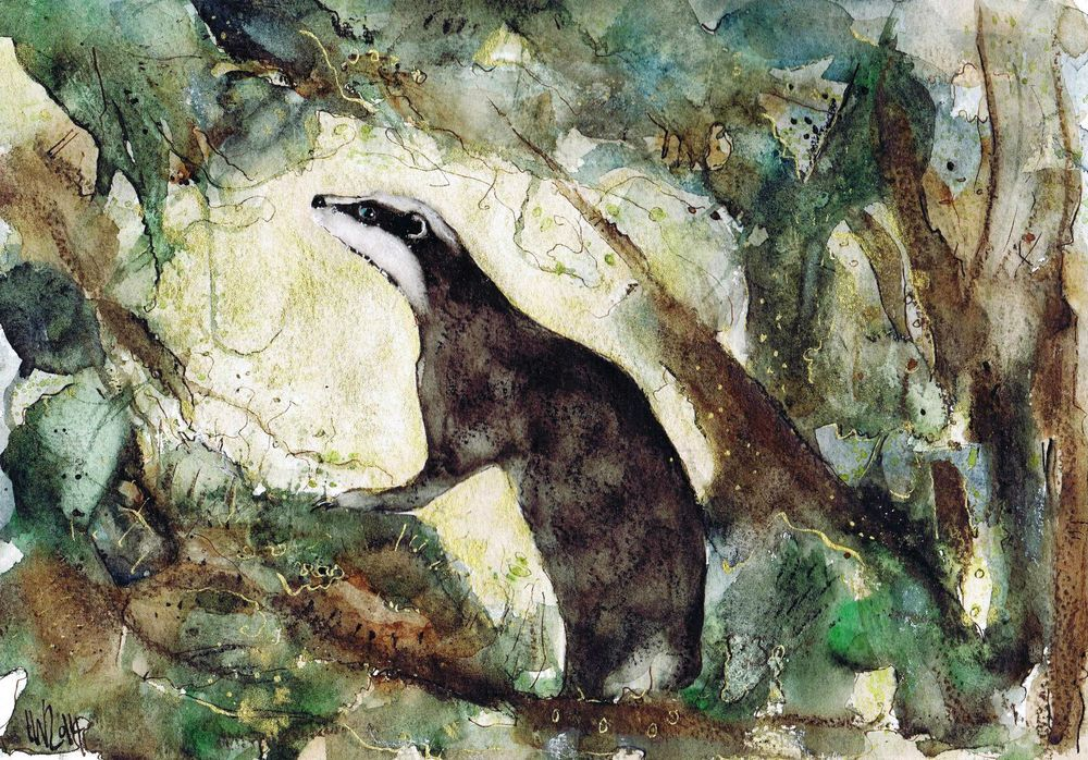 A3 badger fox prints from original watercolour paintings