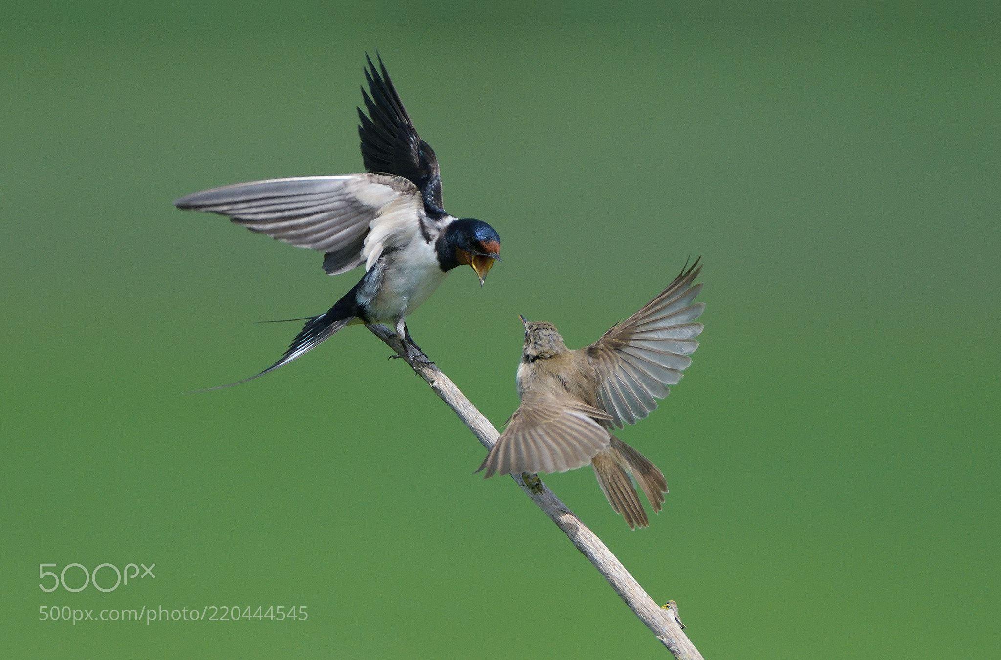 Bugger Off !! (Harry  Eggens / Groningen / Netherlands) #NIKON D500 #animals #photo #nature