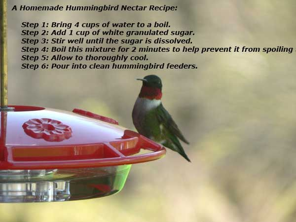 Hummingbird Nectar Recipe How To Make Homemade Hummingbird Food