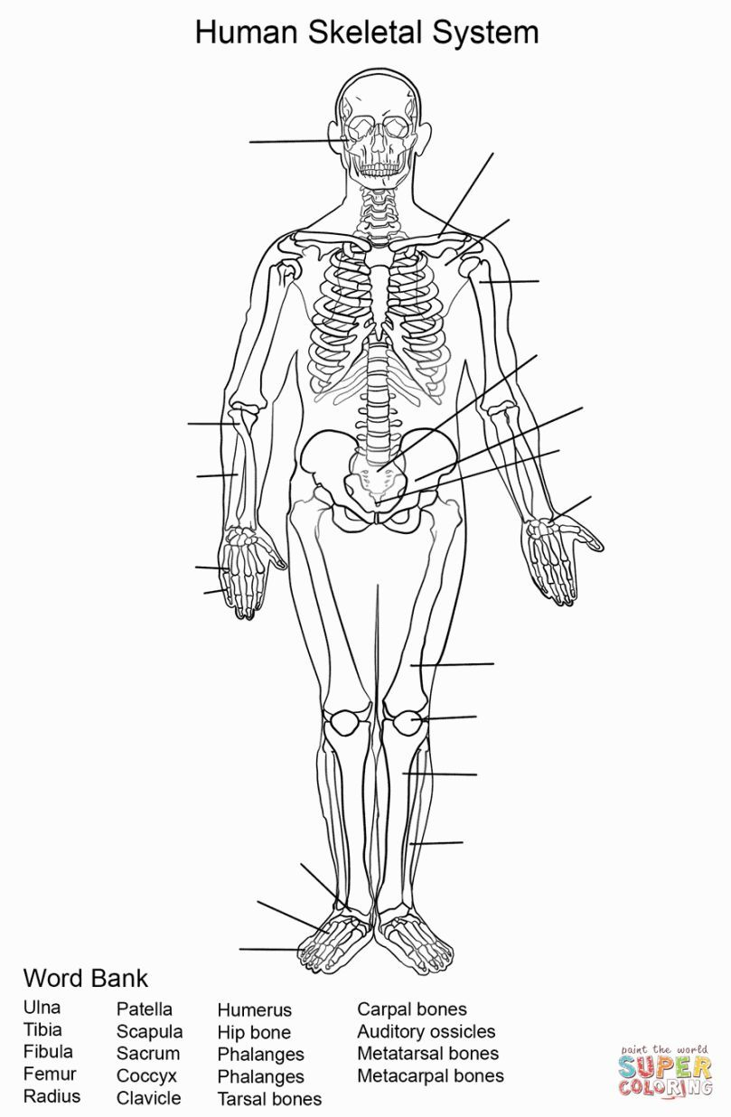 photograph regarding Anatomy and Physiology Printable Worksheets referred to as Skeletal Procedure Coloring Coloring Web pages Skeletal approach