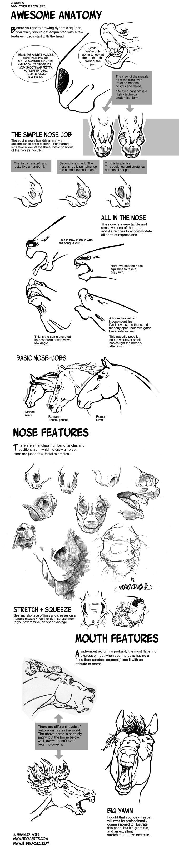 Horse Anatomy Part I by sketcherjak.devia... on @deviantART | Kids ...