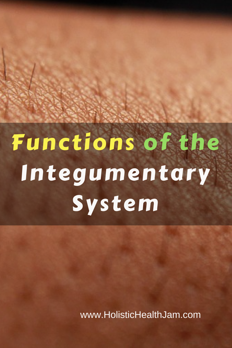 Functions Organs And Disorders Of The Integumentary System