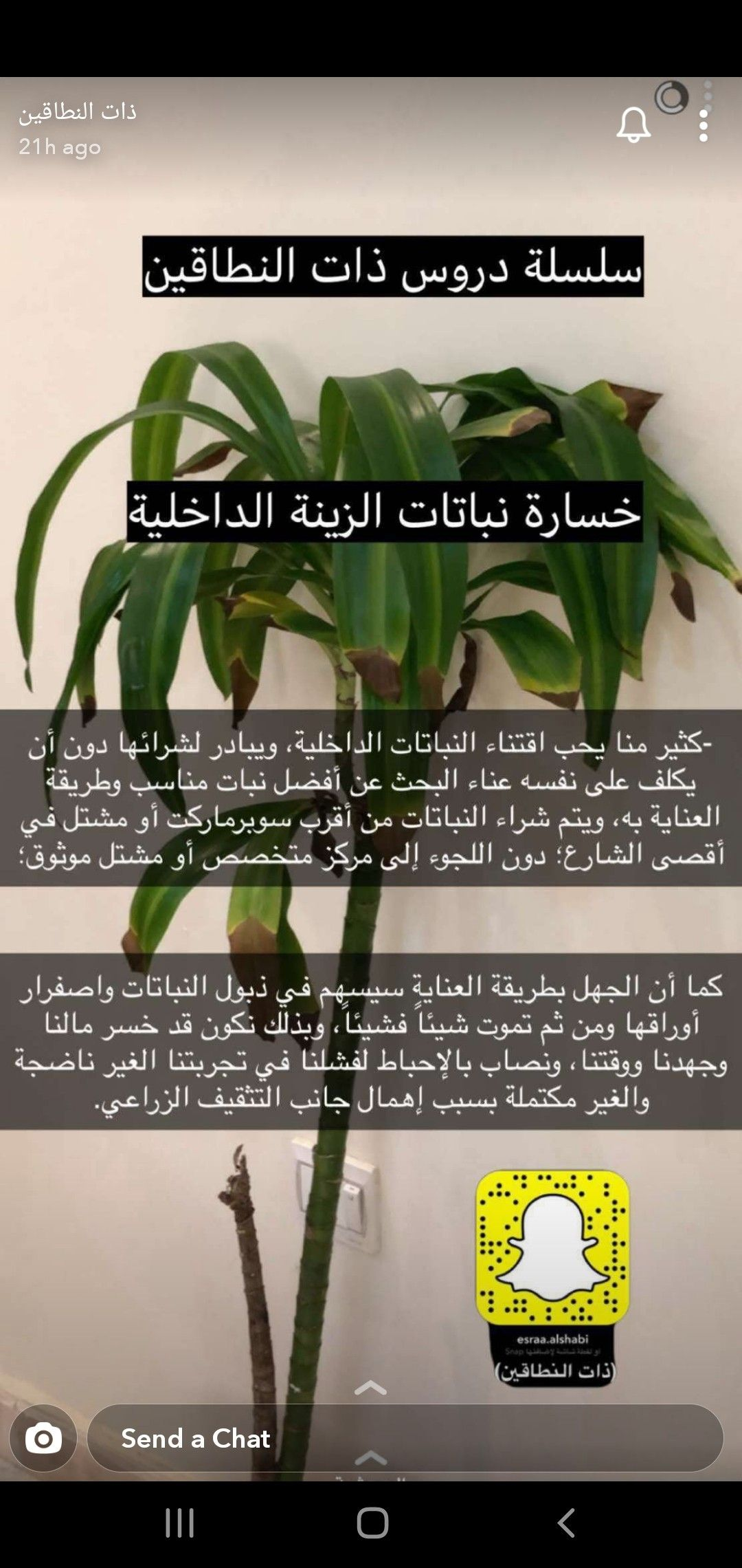 Pin By F Moosawi On نباتاتي الداخلية Indoor Plants Plant Hacks Flower Care Plant Decor