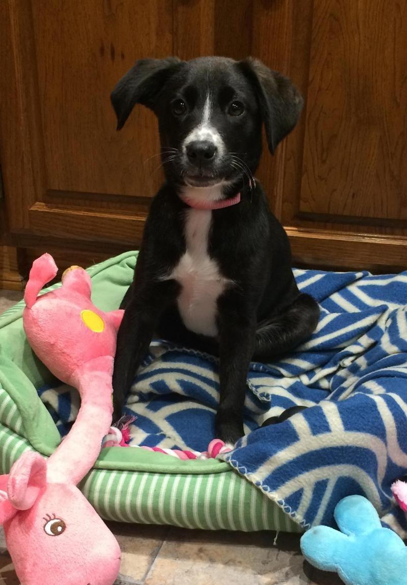 Adopt Zoe On Cute Dogs Breeds Labrador Retriever Labrador Retriever Dog