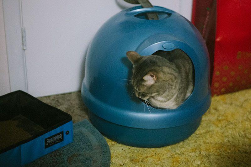 Dig Dome Litter Boxes Petmate Boodas Original Cleanstep Pearl More Cat Training Pet Mat Cats