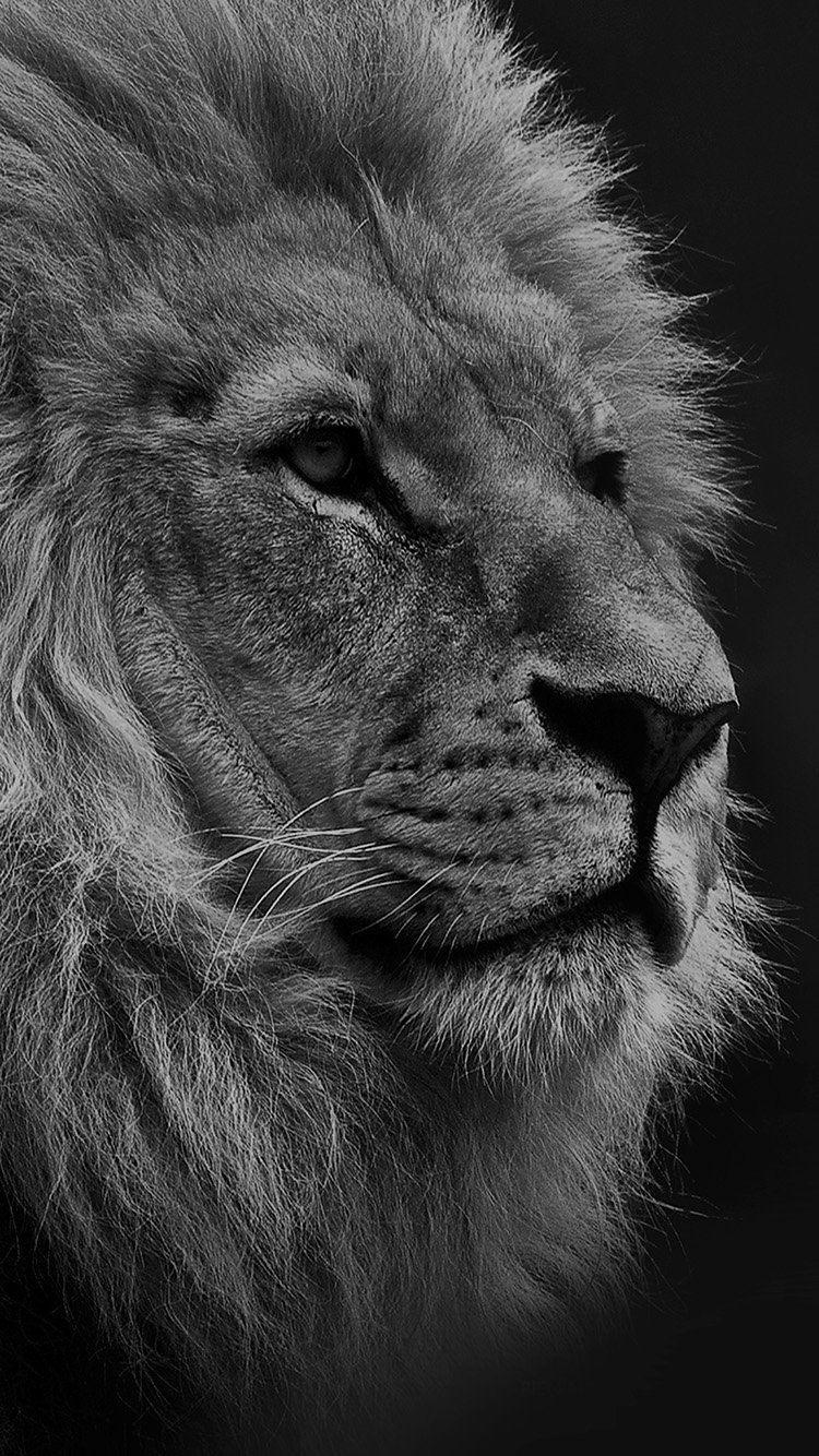 NATIONAL GEOGRAPHIC NATURE ANIMAL LION DARK BW WALLPAPER HD IPHONE
