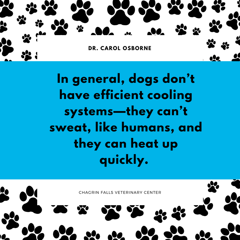 Warning Signs Your Dog Is Suffering From Heat Stroke Healthy Dog Food Recipes Pet Clinic Dog Food Recipes