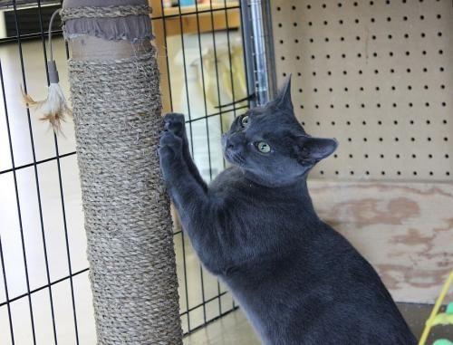 Belle (FCID 06/23/1654 WC Pet Supplies Plus) Pet