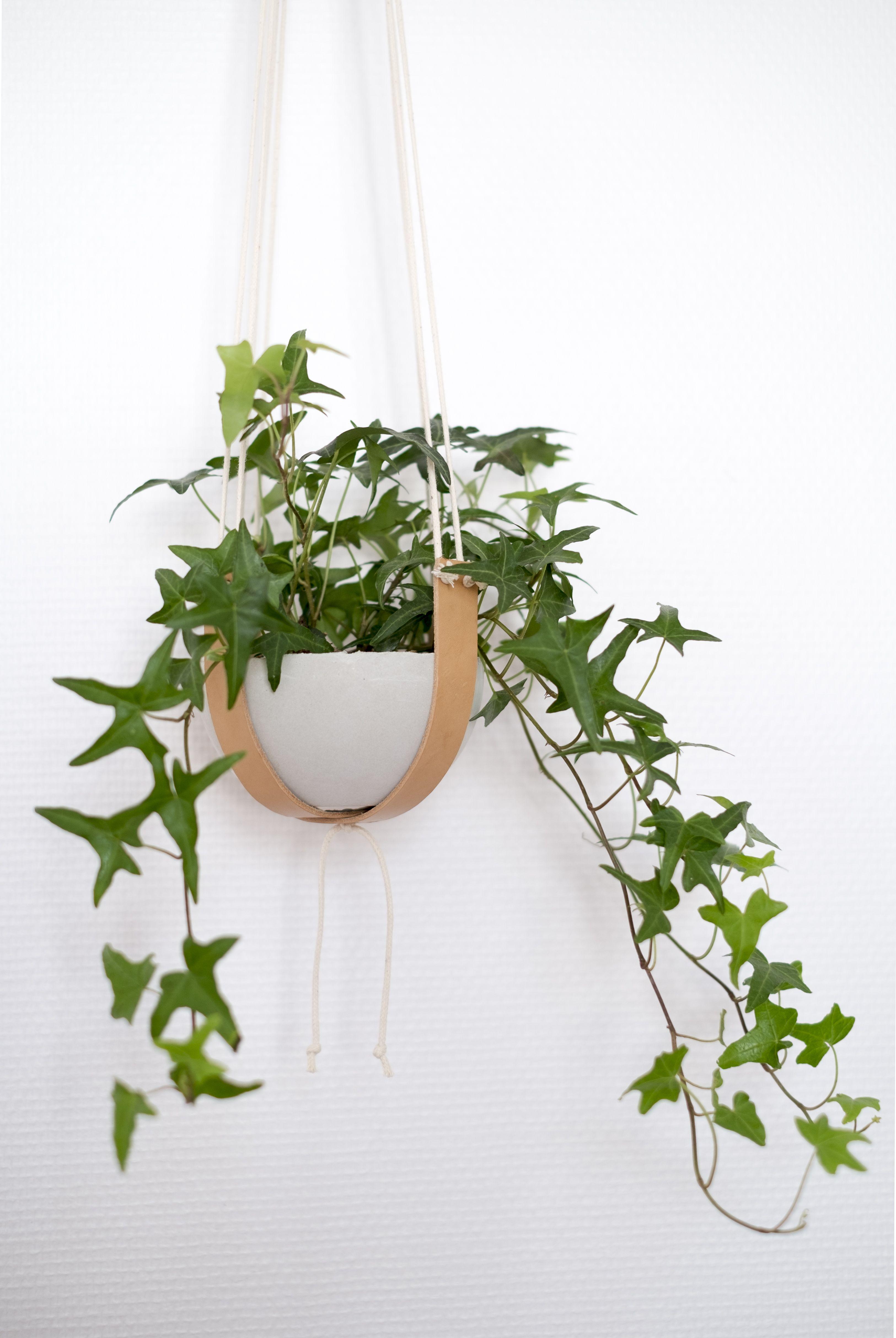 100 Incroyable Suggestions Suspension En Corde Pour Plante