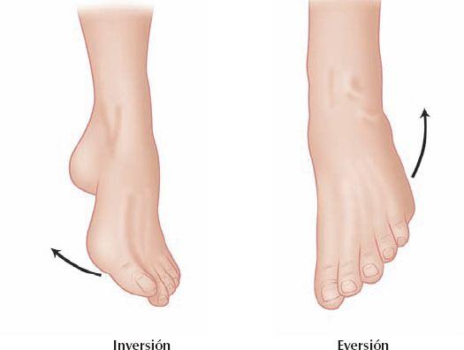 Eversión e Inversión referente al pie | Anatomía Humana | Pinterest ...