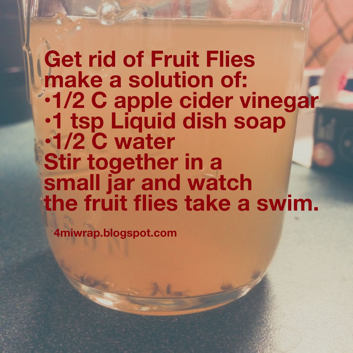 Get Rid Of Those Pesky Fruit Flies Gnats With This Easy Solution Fruit Flies Fruit Fly Trap Cleaning Hacks