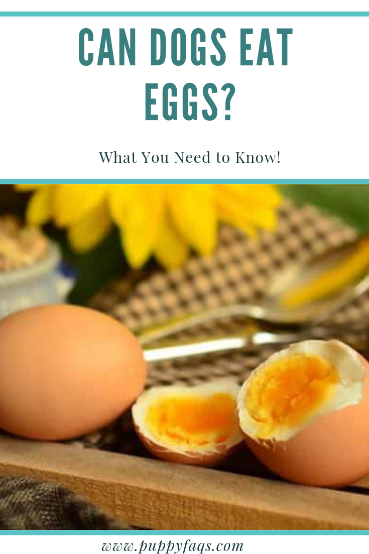 Can Dogs Eat Eggs Are Eggs Safe For Dogs Can Dogs Eat Eggs Easy Dog Treat Recipes Natural Dog Treats Recipes