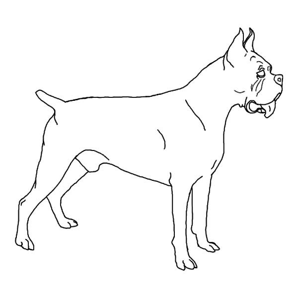 Boxer Dog How To Draw Boxer Dog Coloring Pages How To Draw Boxer