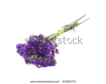 Stock photo small bouquet of purple statice flowers on white stock photo small bouquet of purple statice flowers on white background mightylinksfo Images