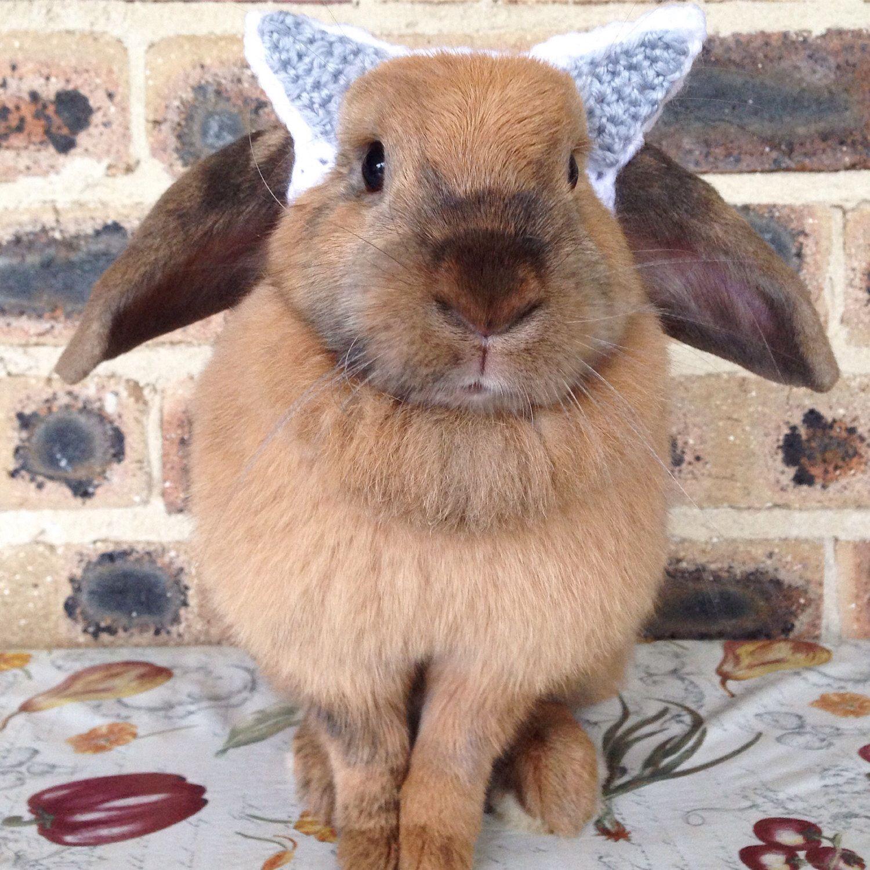 Wolf headband for bunnies, pet rabbit headband, pet rabbit