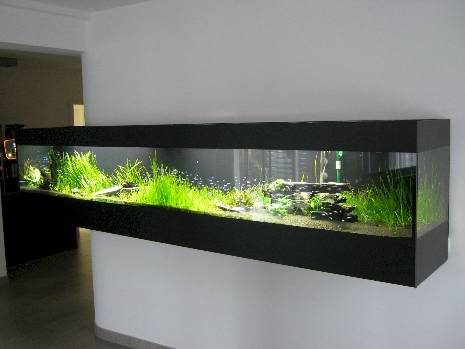 изящная красота фото узких аквариумов депутат