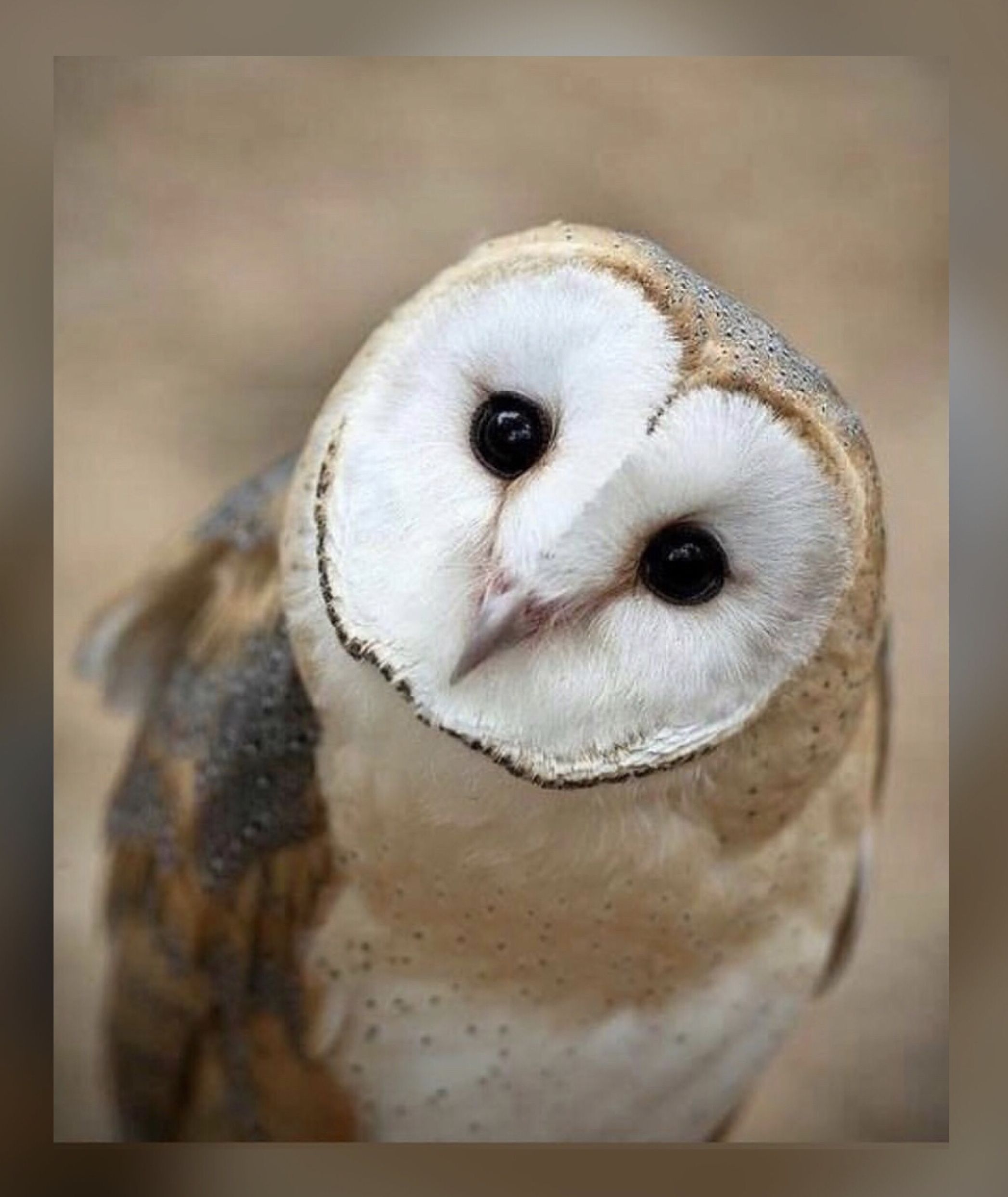 Pin by Kar3n.59 on Jehovah's Awesome Creation Owl, Barn