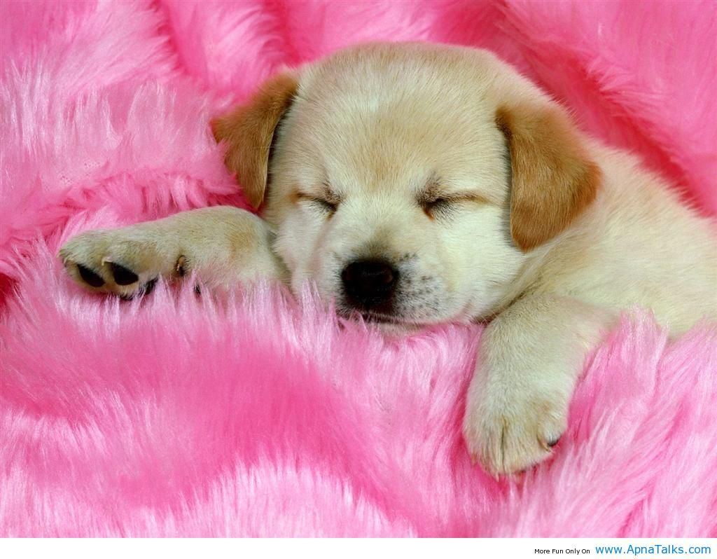 Baby Dog Wallpaper High Quality Resolution KXh