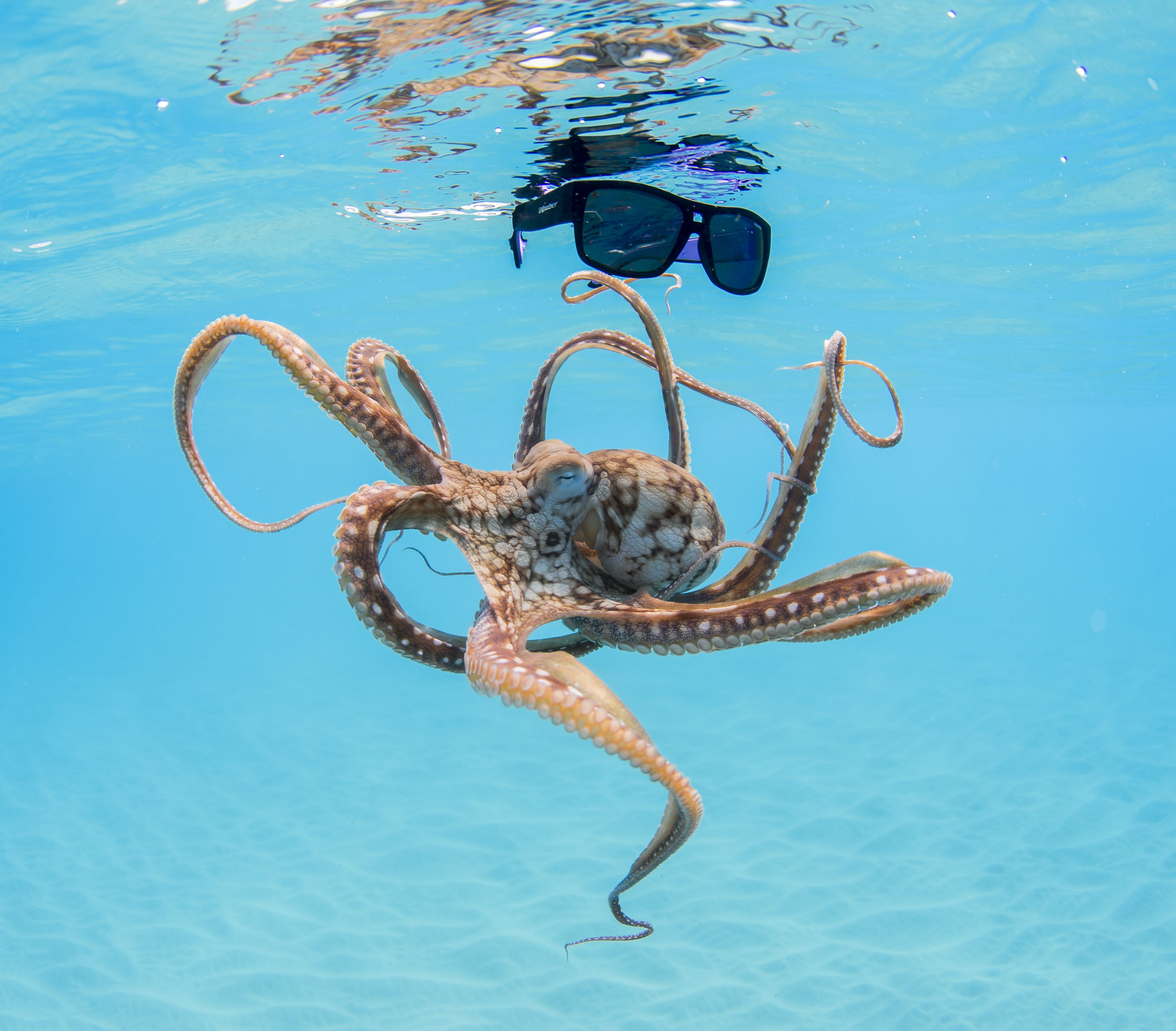 Our sunglasses float with an octopus what do your