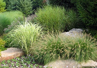 1000 images about grass gardens on pinterest ornamental grasses lawn and grasses
