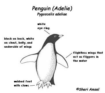 Penguin Adaptations Related Keywords & Suggestions - Penguin ...