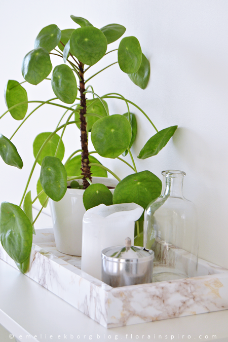 1 plant 3 stylings urban jungle bloggers pilea for Plante pilea