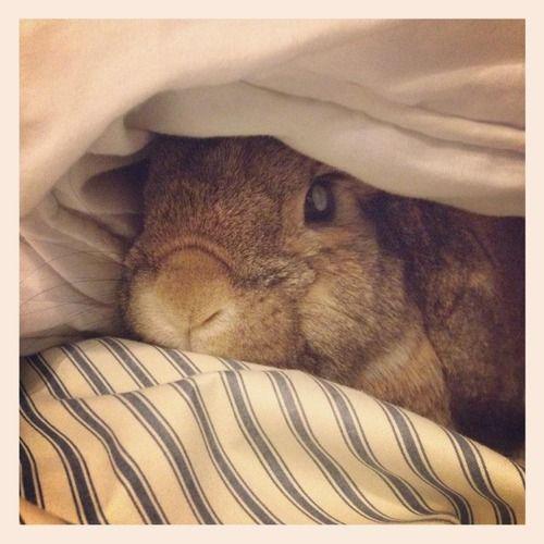Bunny wants five more minutes
