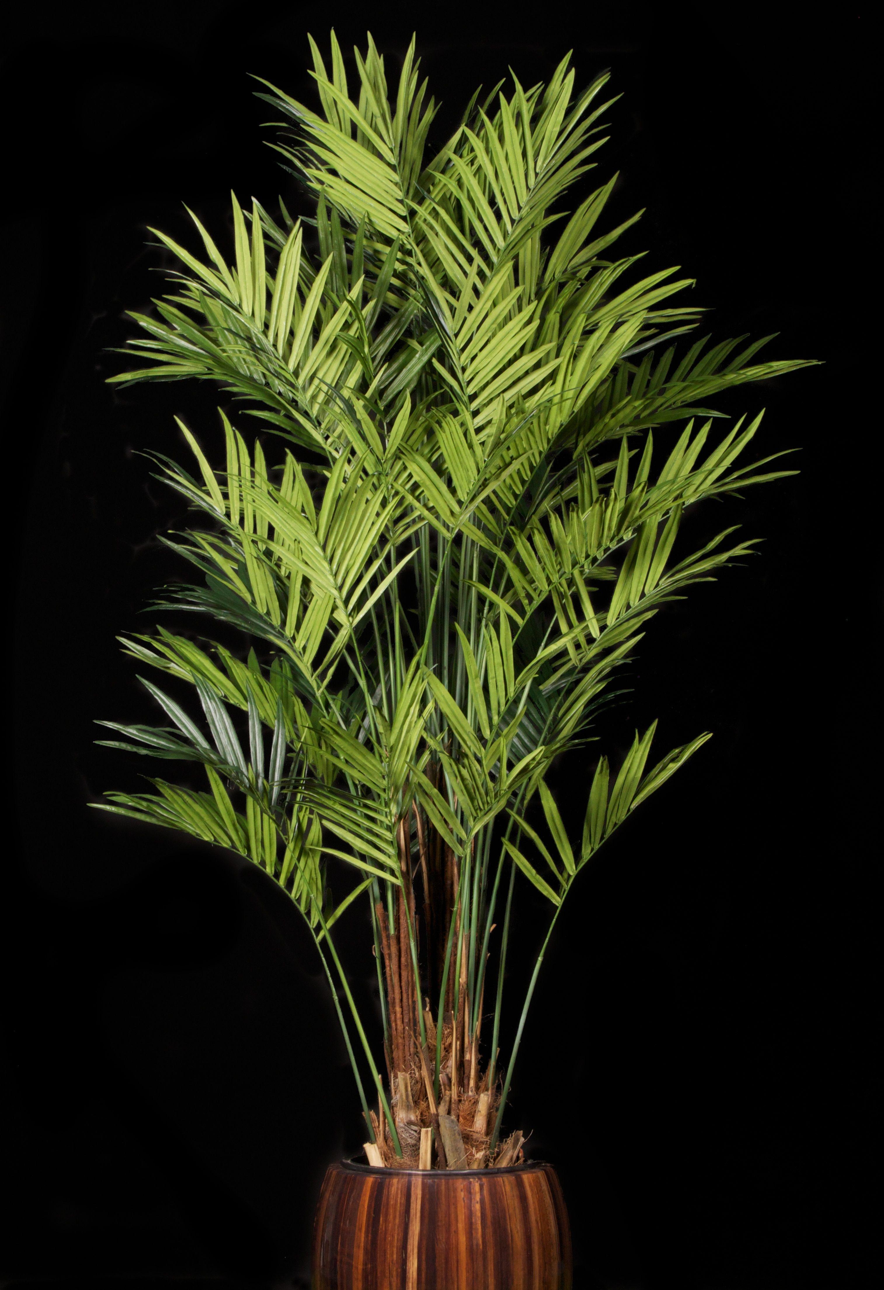 Replica Kentia Palm Kentia palm, Artificial trees, Wood tree