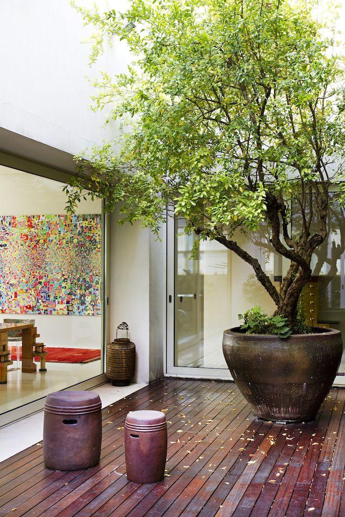 Your Dream Garden Is In Sight Jardin Interior Arboles De Interior Jardines