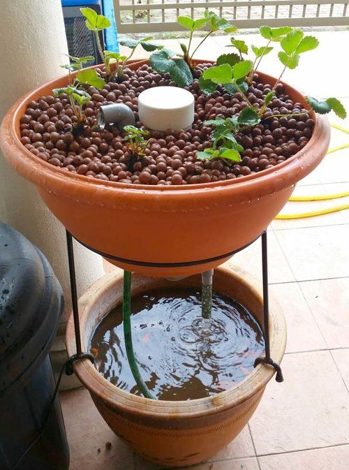 10 Awesome Diy Aquaponic Builds To Inspire You Indoor 400 x 300
